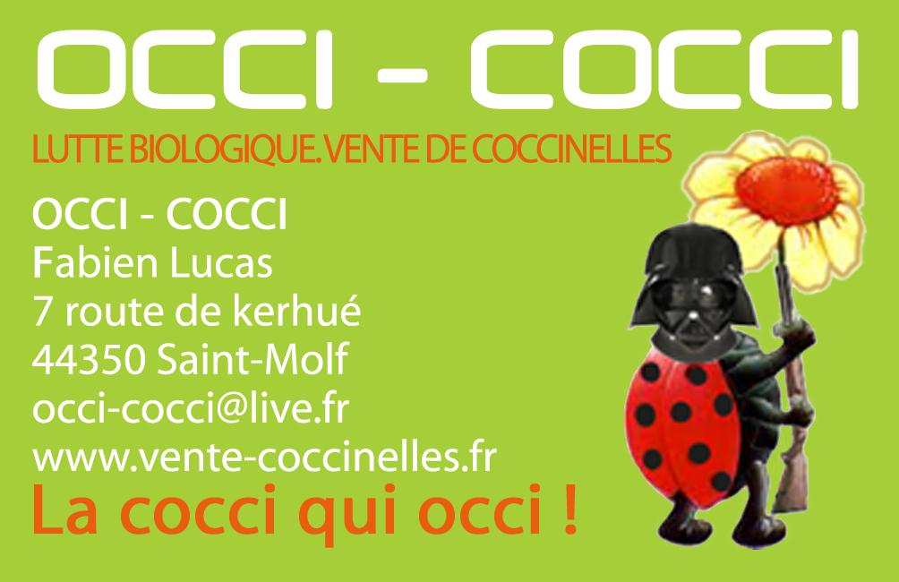vente larves de coccinelles